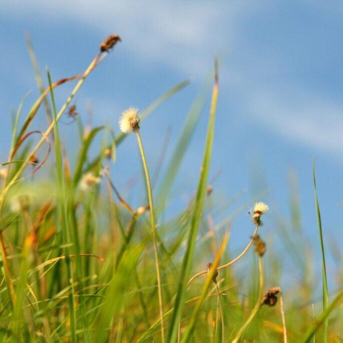 an overgrown weed grass