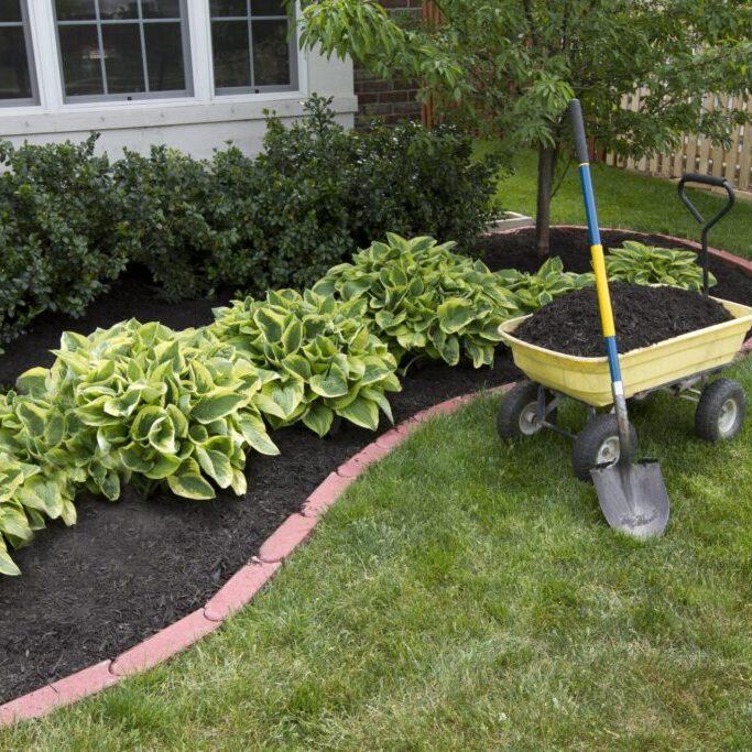 a garden with fertilizer