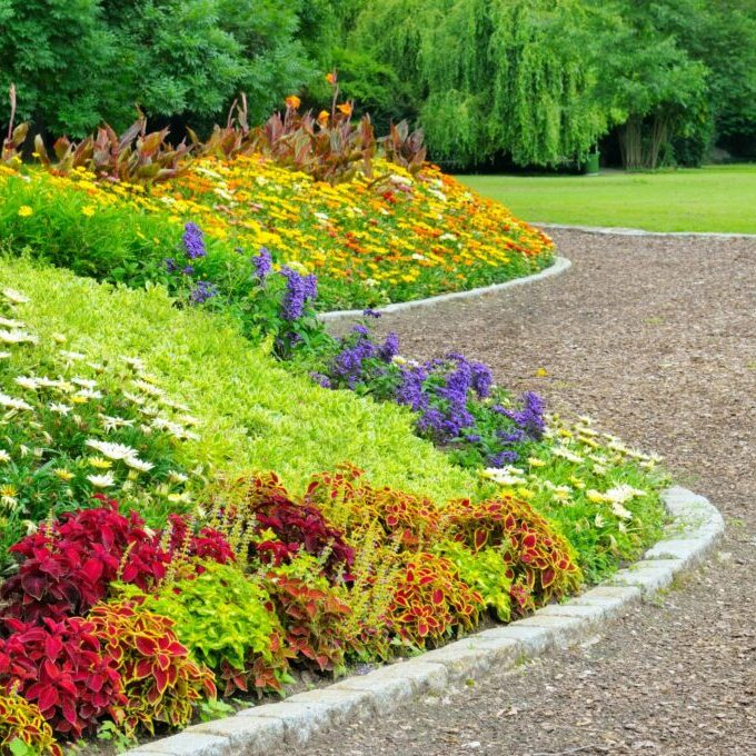a landscape with different color and kind of flower